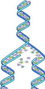 2015-1 No 1 Human Genome DNA split