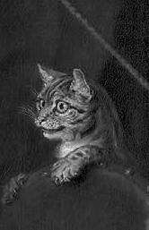 Fig.1: William Hogarth's alert cat, ears pricked, teeth bared, claws unleashed, and intent gaze fixed upon its notional prey (a caged bird)– revealing the feral cat within the domestic pet. Source: detail from Hogarth's Portrait of the Graham Children (1742).
